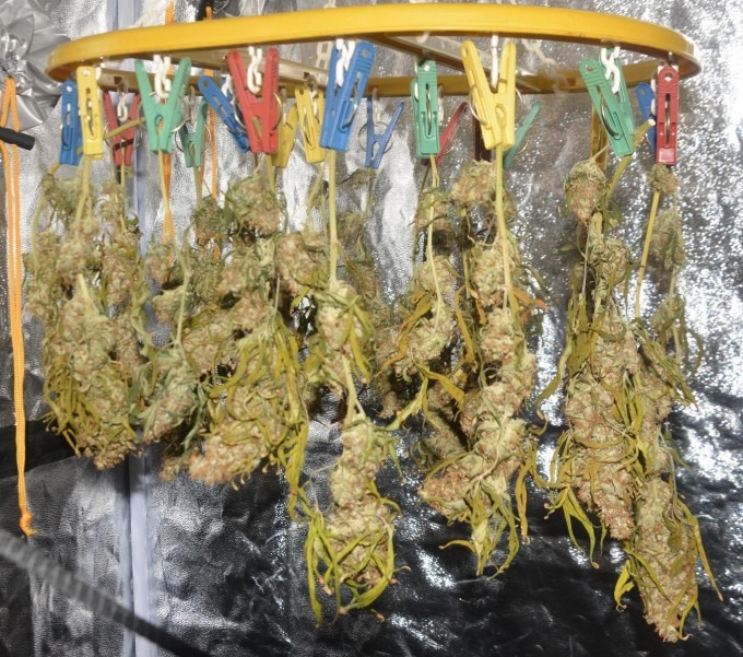 day 138 BA drying 8.JPG