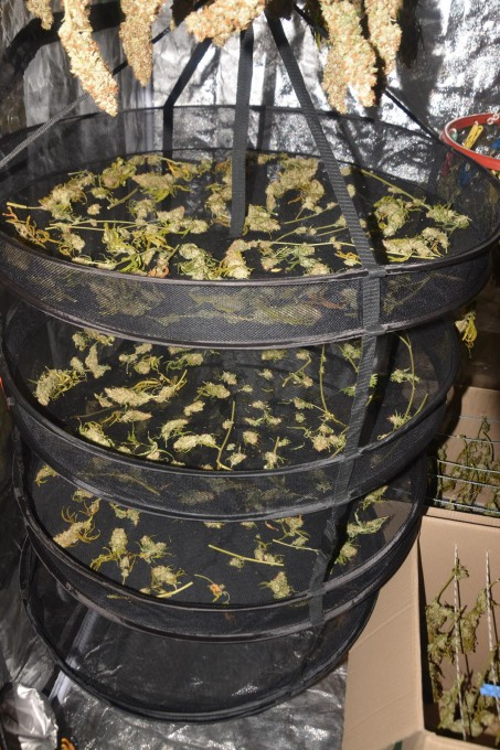 day 138 BA drying 9.JPG